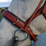 Nasenteil des Kappzaums am Pferd