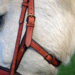 Seitenansicht des Kappzaums am Pferd